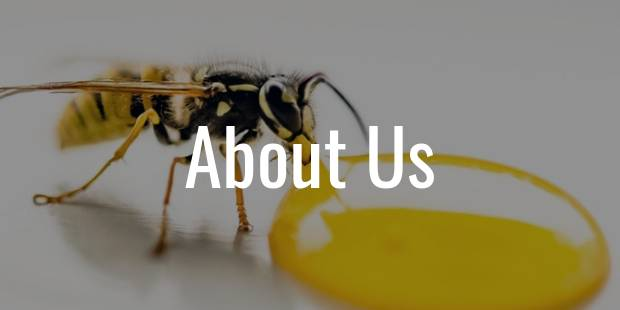 about us - image of a bee drinking honey