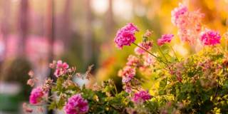 picture of healthy flowers in evening